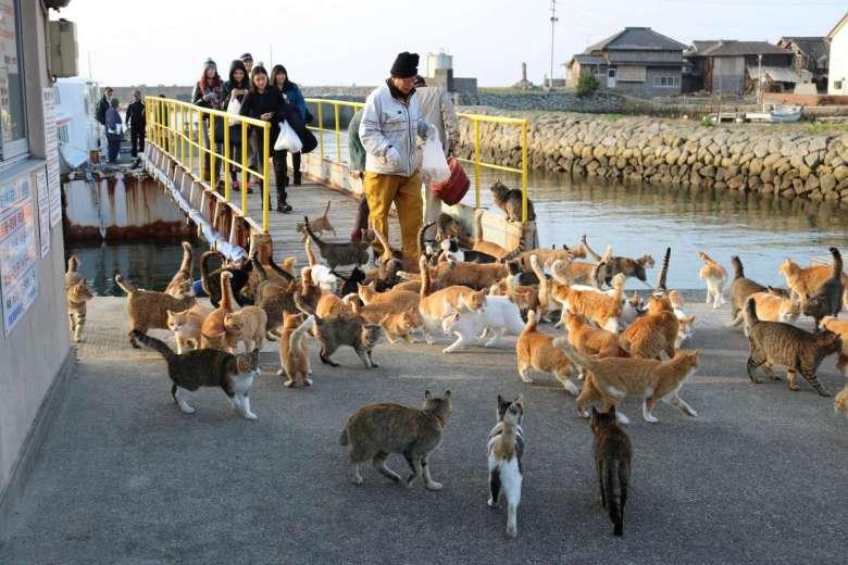 37576536_-_26_02_2016_-_japan-cat-island.jpg