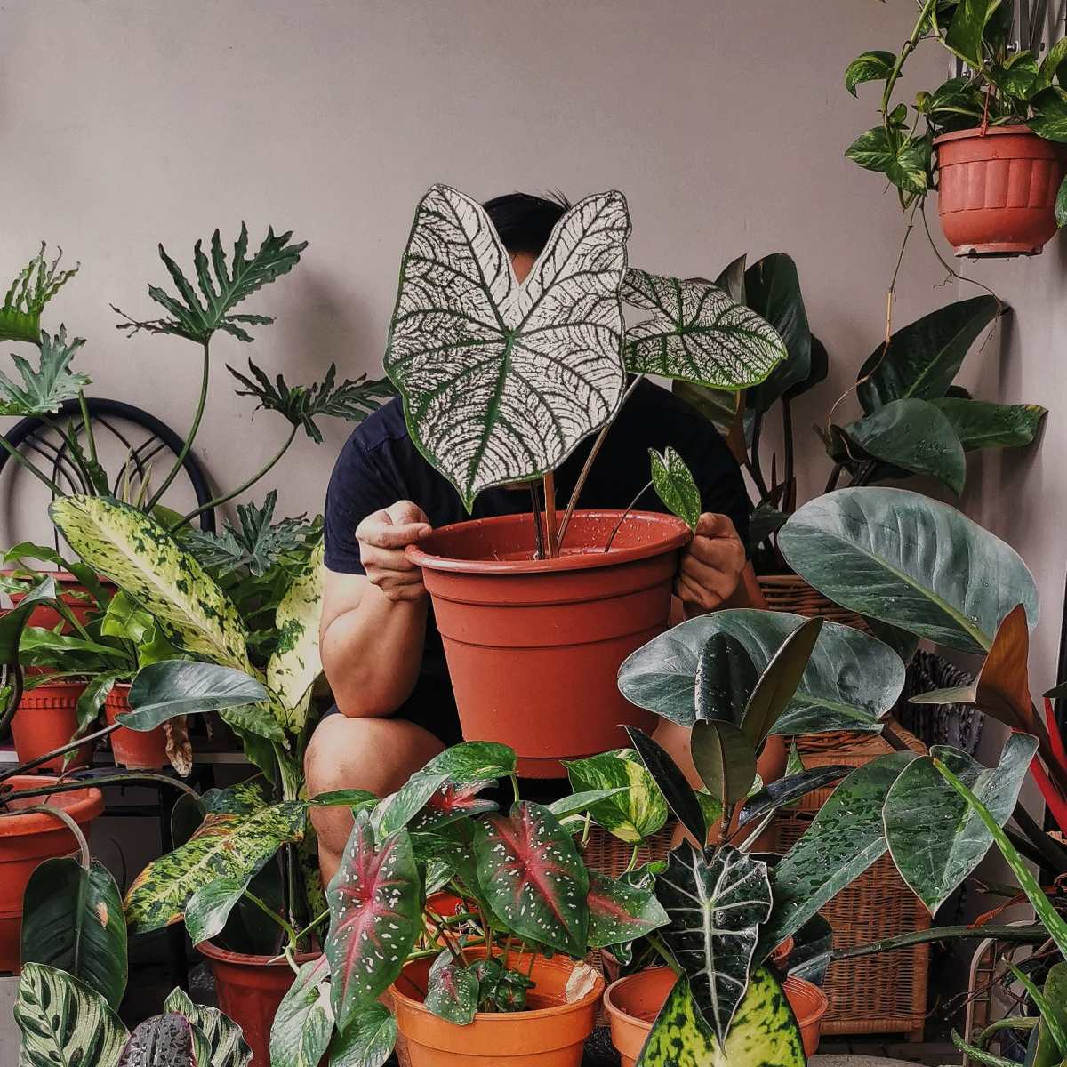 Cara Untuk Mulakan Tanam 'IndoorPlants'